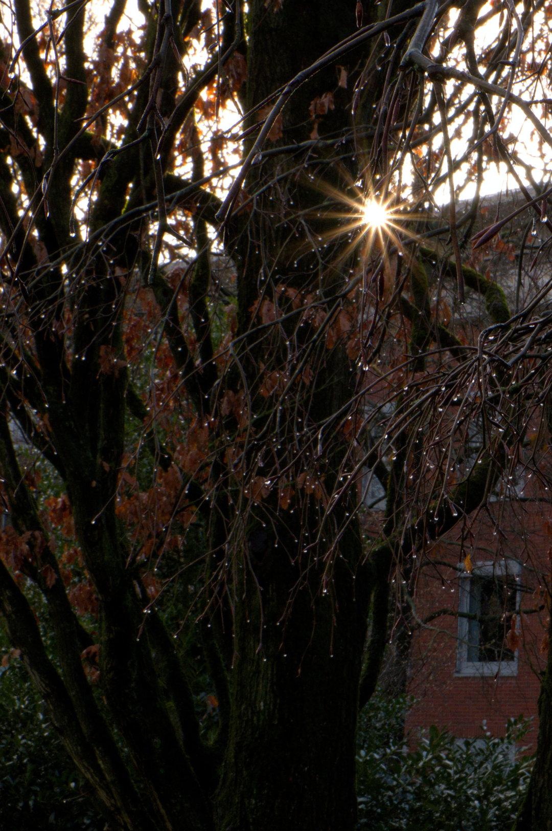 sunstar.jpg